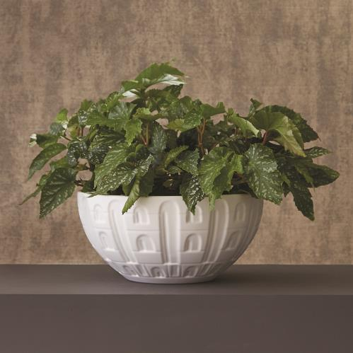 Coliseum Bowl-Matte White