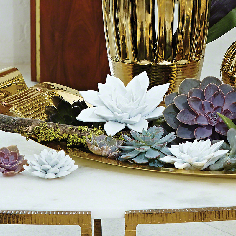 Succulent-Bisque White