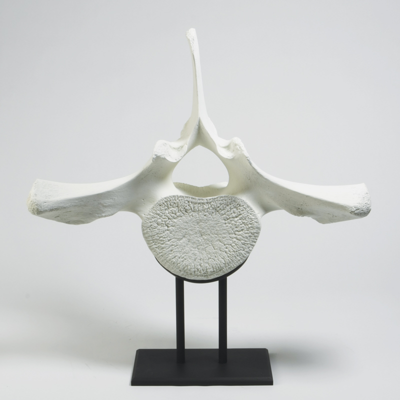Whale Vertebra On Iron Stand