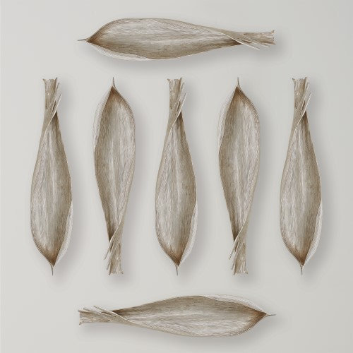 Global Views Products Palm Seed Pod Nickel