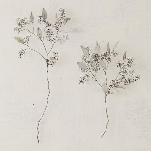 Seeded Eucalyptus-Antique Nickel